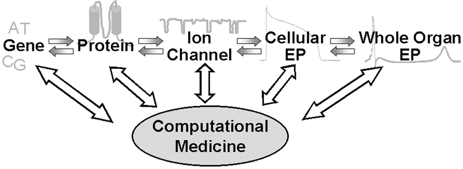 KIT - Mitarbeiter - Alumni - Elektrophysiologische Auswirkungen von ...